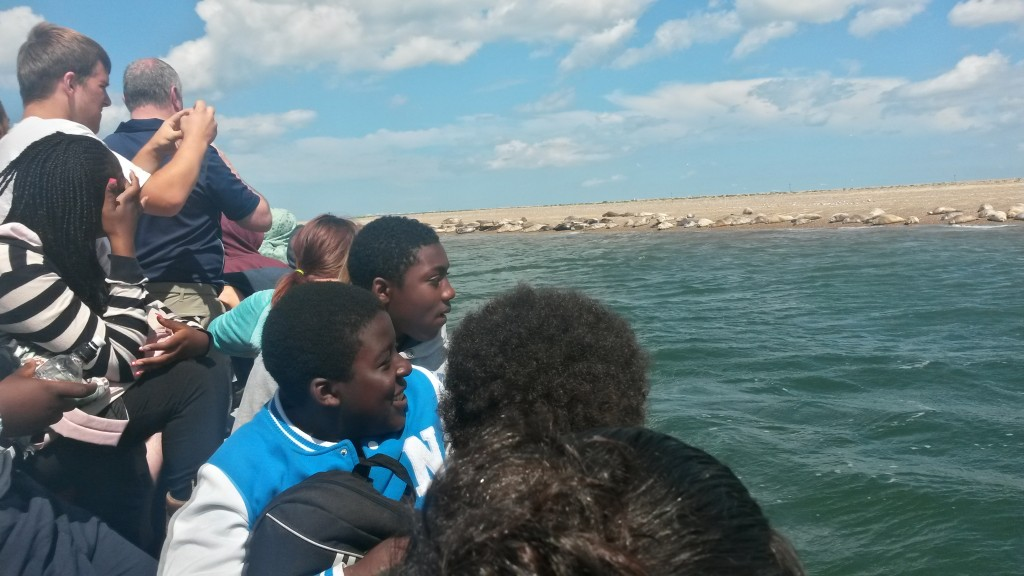 Seeing the Seals at Blakeney Point